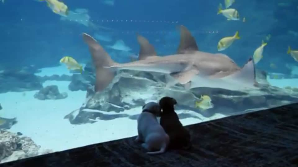 The image shows the two dogs looking at a fish.
