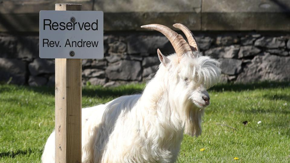 A goats sits next to a reserved sign in Llandudno as the spread of the coronavirus disease (COVID-19) continues, Llandudno, Wales, Britain, March 31, 2020.