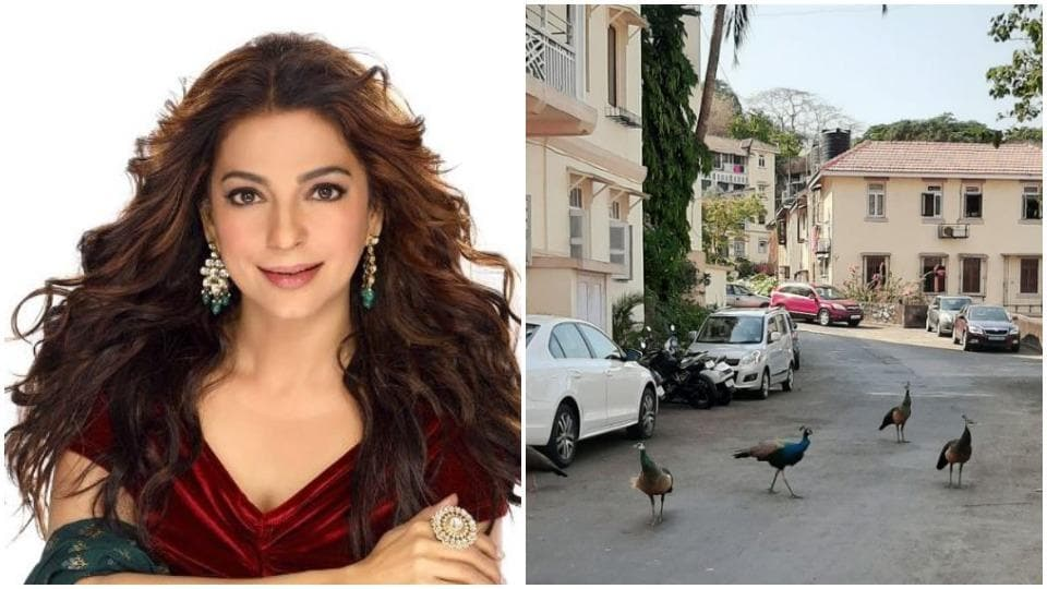 Juhi Chawla shares pics of peacocks visiting Mumbai homes amid lockdown, fans joke 'they're out to find where humans are'
