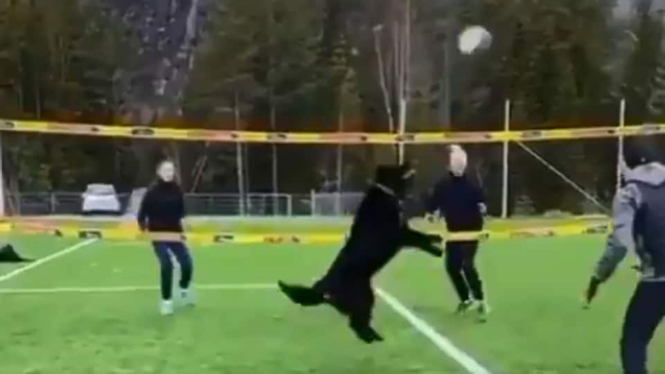 The image shows the dog playing volleyball.