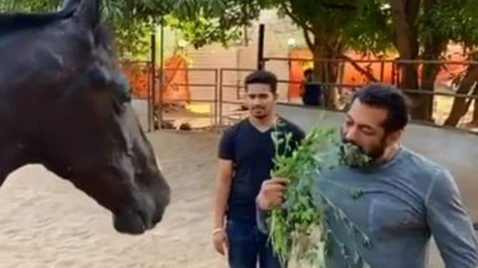 Salman Khan eats horse food during lockdown, seems to enjoy it: 'It's damn good' – bollywood