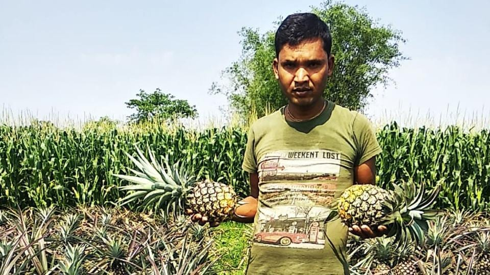 Pineapple growers say thousands of fruit pieces perished in last few weeks because of no movement is allowed during Covid-19 lockdown.