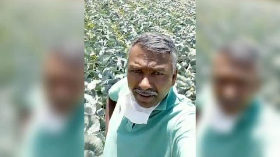The 50-year-old vegetable farmer in Voddarahalli village in Karnataka's Chamarajanagara district, located on the border with Tamil Nadu, said that he had nearly 100 tonnes of cabbage that was ready for harvest.