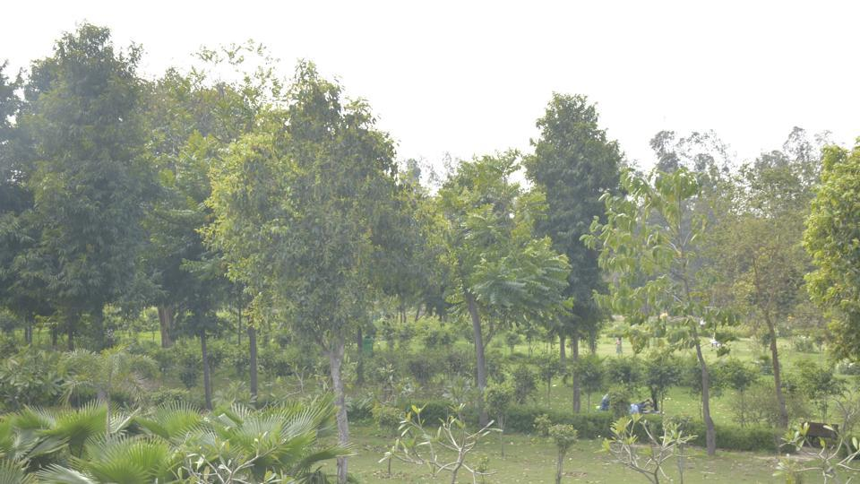 Environmentalists  and local residents are now concerned that the same ecological value cannot be recreated through artificial plantations in fragmented patches of land.