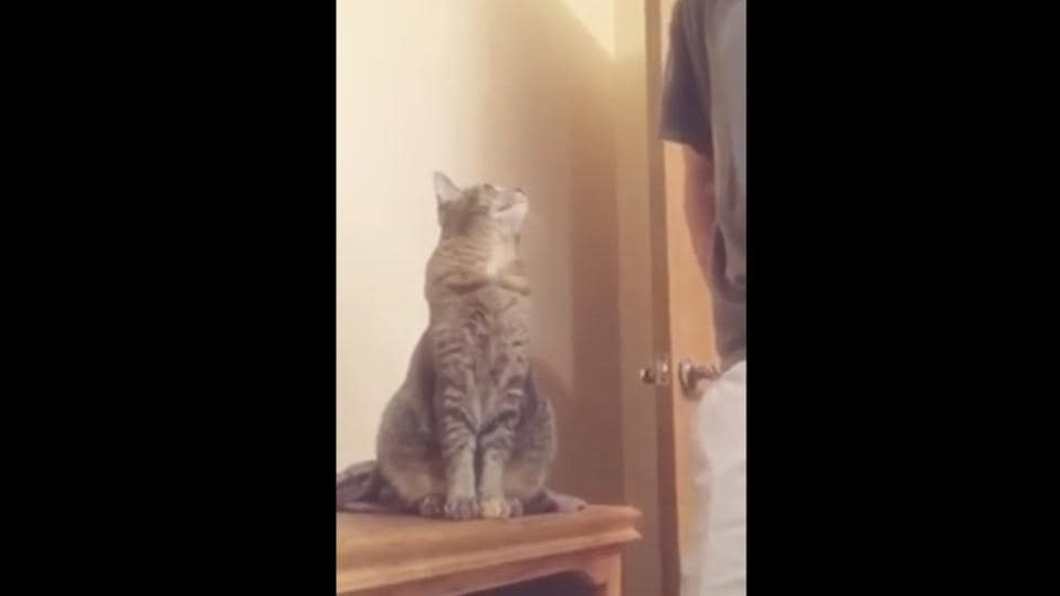 The image shows the cat looking at its hooman.