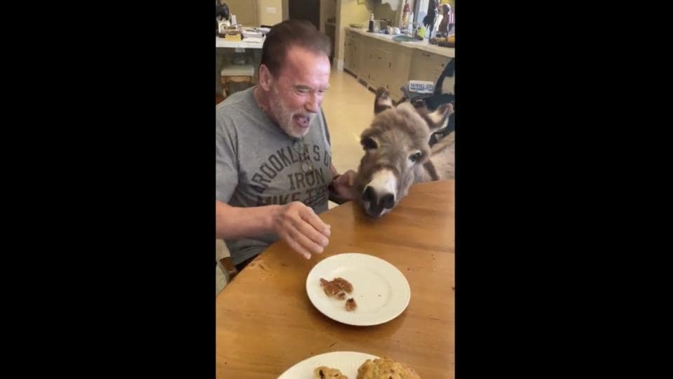 The image shows Arnold Schwarzenegger with his pet donkey Lulu.