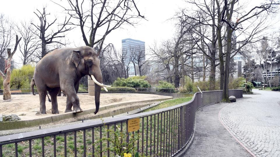 There have been no reports of Elephants raiding human habitats in north Bengal since the lockdown began.