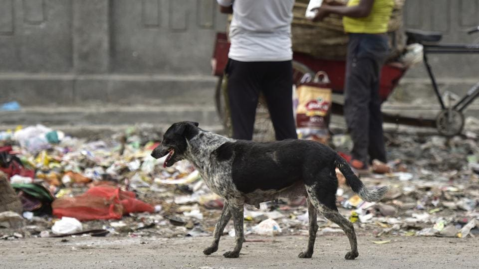 The dog was spotted holding the head in its jaws in Raja Bazaar area of the city.