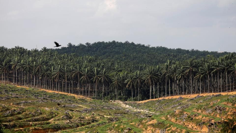 Land that has been cleared is pictured at an oil palm plantation in Johor, Malaysia.