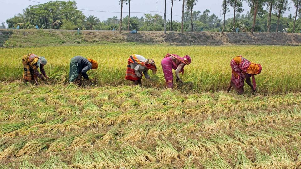 Farmers harvest crops at a field, during the ongoing Covid-19 nationwide lockdown at Parui in Birbhum district.