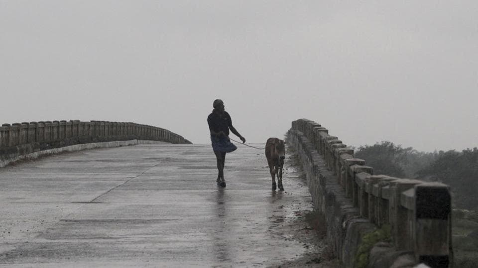 A man walks with a calf over a bridge in the rain at Bhadrak district, Odisha, on May 20. A storm surge, as high as five metres above the astronomical tide, will inundate the low-lying coastal areas in Bengal, according to IMD Director General Mrutyunjay Mohapatra. (AP)