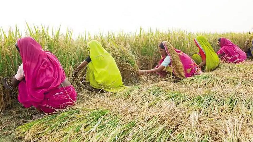 Madhya Pradesh agriculture minister Kamal Patel said agriculture sector has generated jobs and saved us from starvation. (HT file photo)