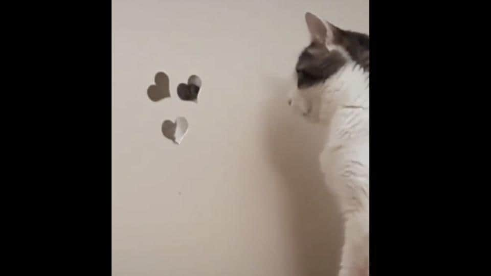 The image shows the cat standing in front of wall mirrors.