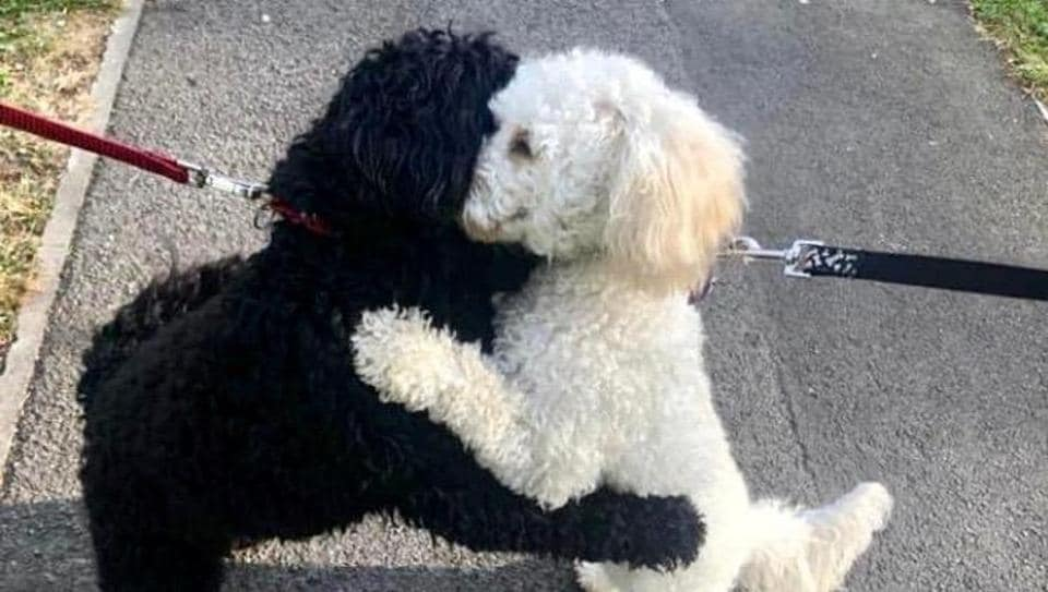 The image shows the two dogs hugging each other.