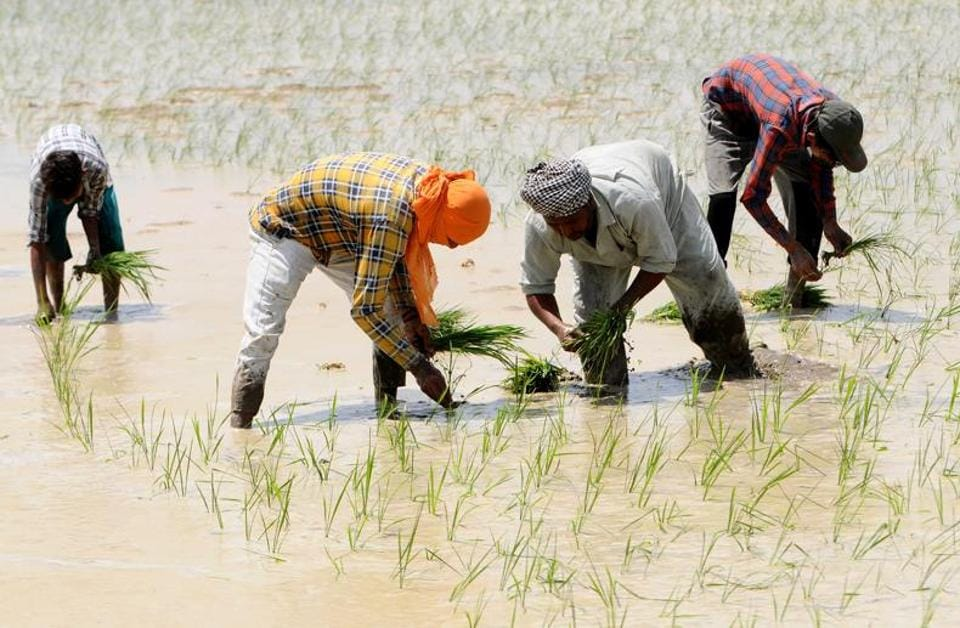 Of the total area under paddy cultivation, 4 lakh hectare (20% more than last year) is expected to be sown with lesser water consuming direct seeding of rice (DSR) technique this year