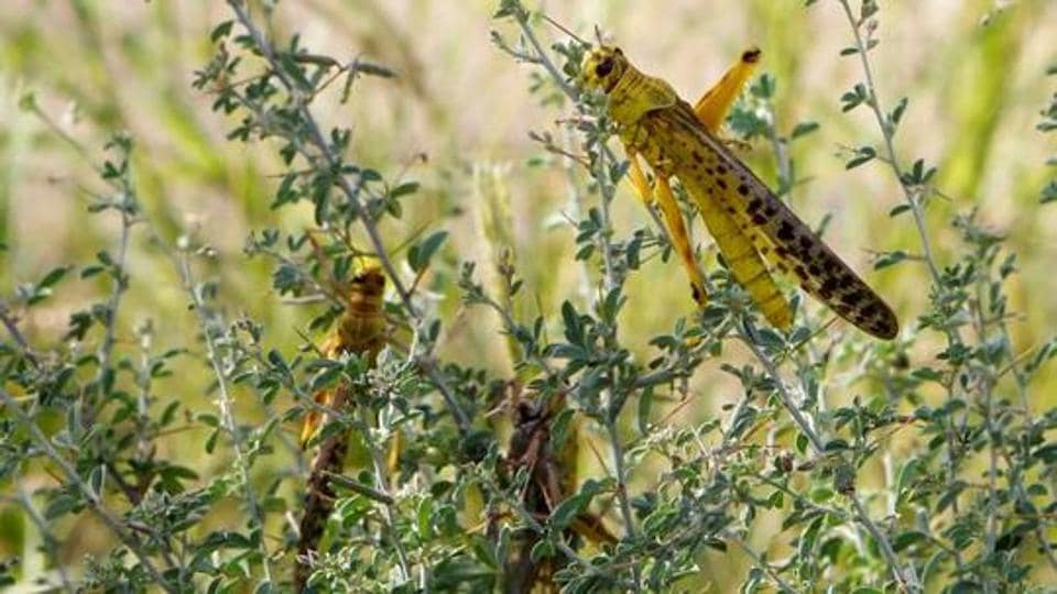 India mooted the coordinated response to control desert locust populations to Iran and Pakistan as part of efforts to further regional cooperation.
