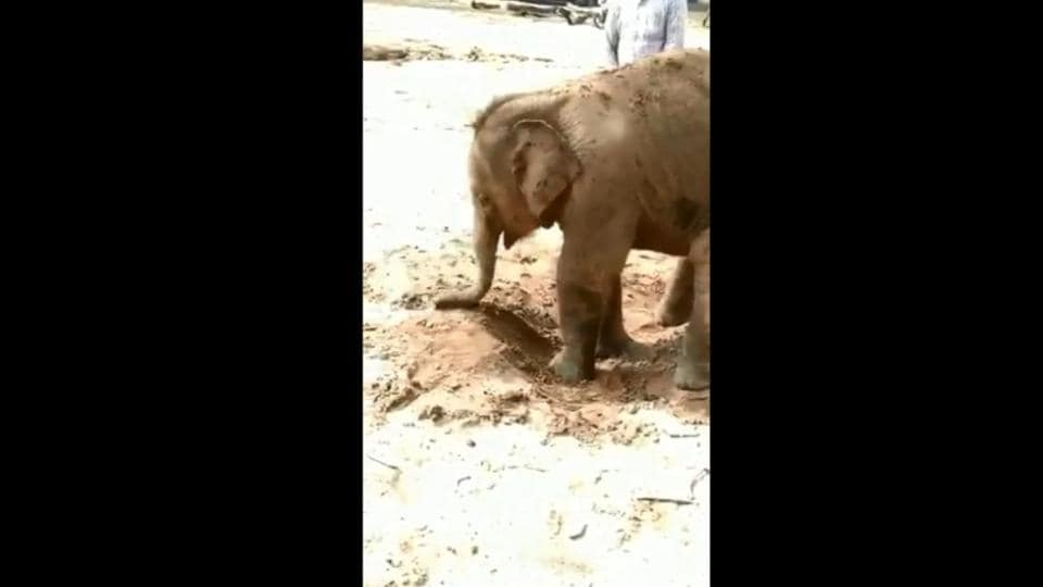 The image shows the baby elephant playing in mud.