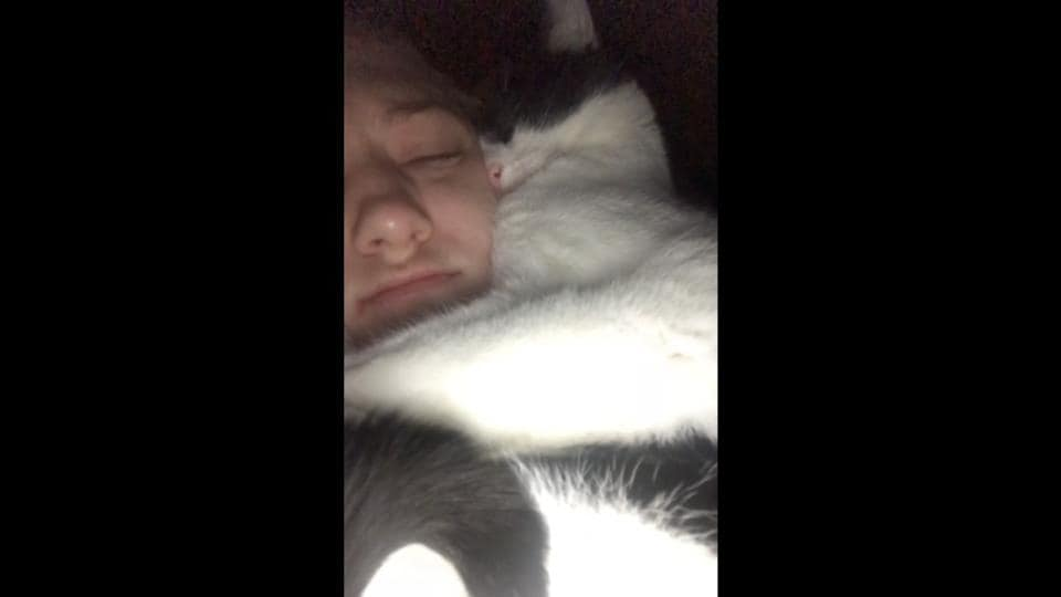 The image shows the cat with its human.