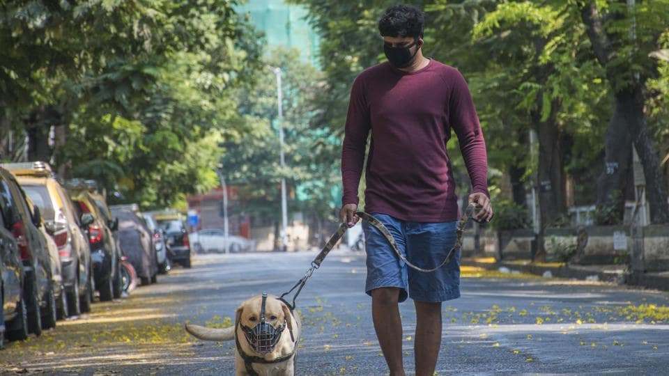The organisation had so far rescued over 40 such dogs from different parts of the city and sent them to shelter homes in the outskirts of Pune.