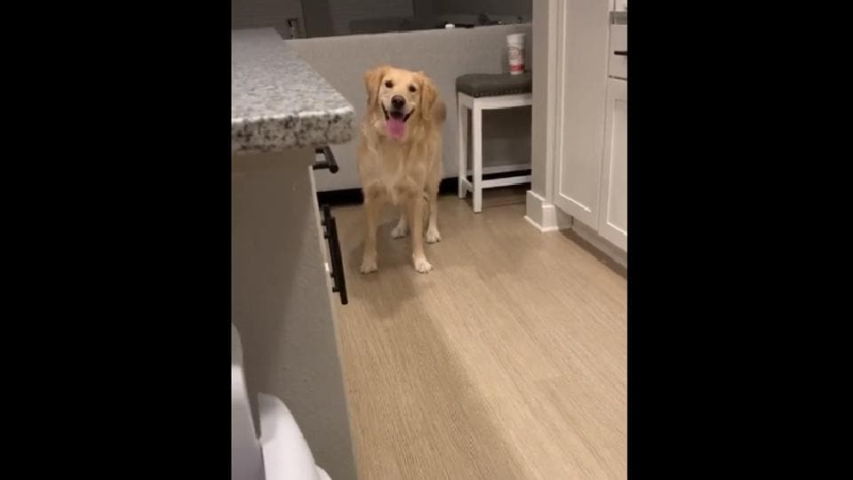 The clip gives a glimpse of Bella, a golden retriever, and her thoughts about her human.