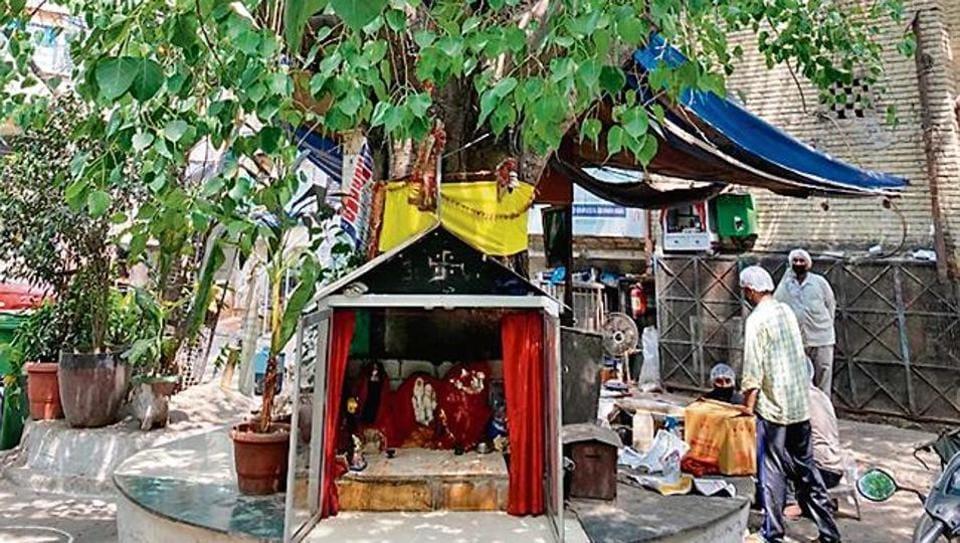 Delhiwale: A tree is reborn
