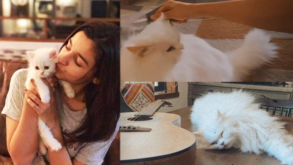 Alia Bhatt has shared a glimpse of her cat's grooming session at home.