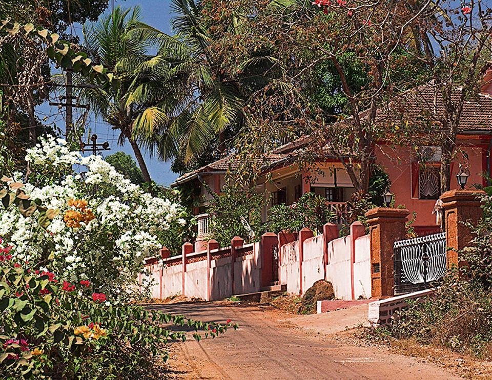 Picture of paradise:Even when there is no lockdown, the author says she meets very few people during her morning walks in rural Goa.
