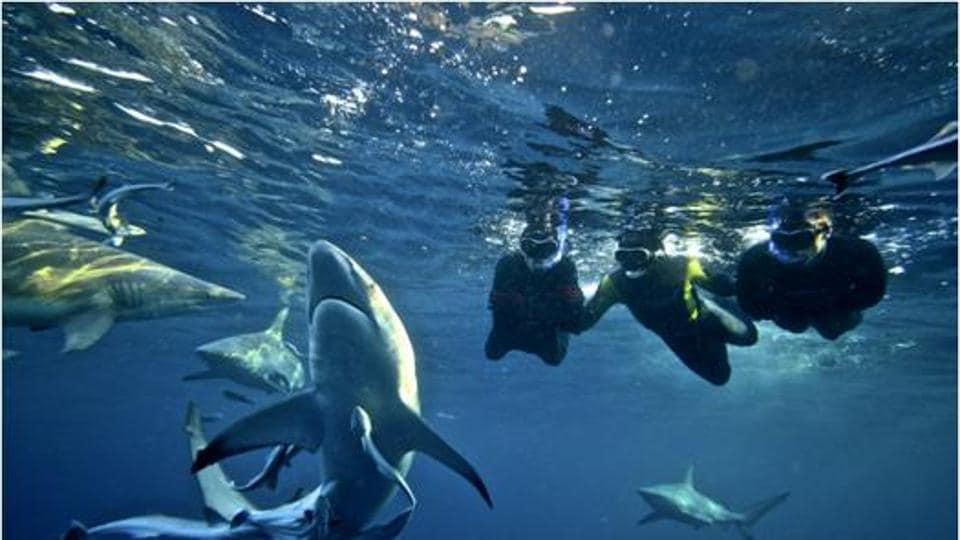 Snorkeling with the sharks at Kwa-Zulu Natal.
