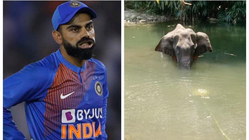 Virat Kohli angry with death of pregnant elephant.