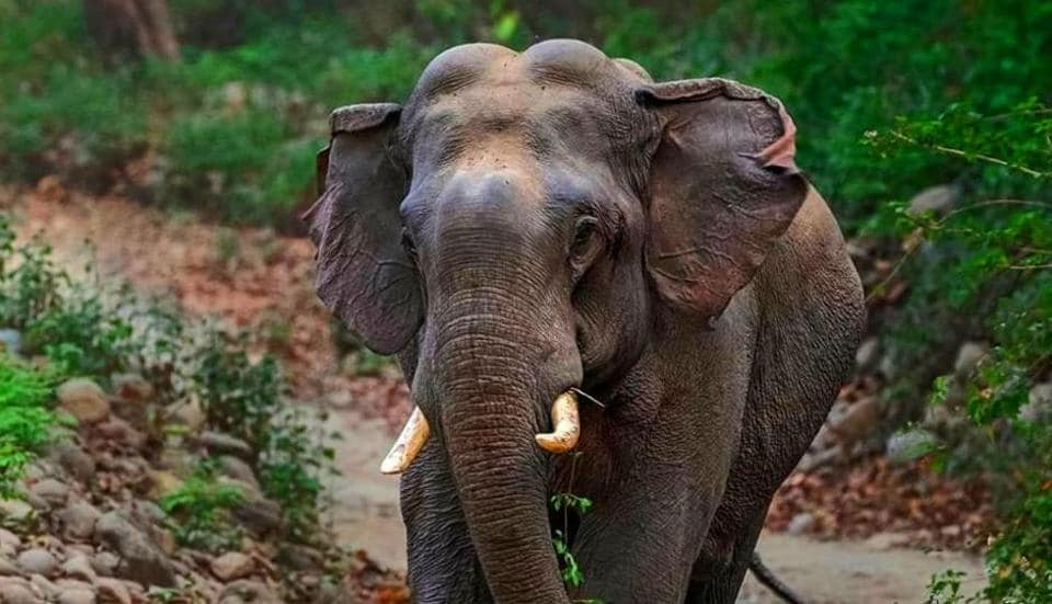 Uttarakhand preps for elephant census, will use drones for first time
