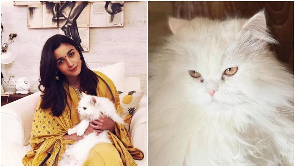 Bollywood is cat crazy and unapologetic about it. Mention Alia Bhatt's pet Edward and she can go on and on about all the amazing vibes a furry friend can bring into one's life. Featured here are Alia and her pet Eddie.