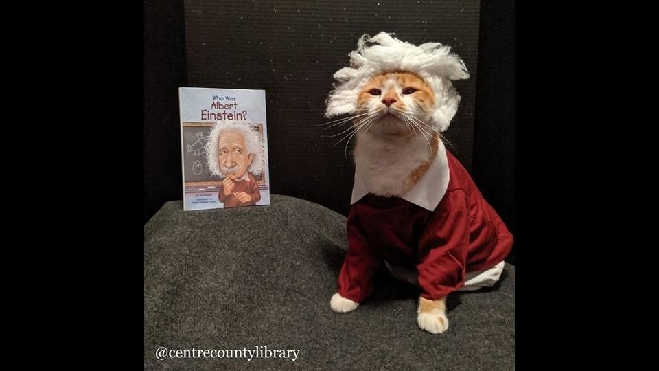 """Lisa Shaffer designed costumes and set up photoshoots for her cats and began posting every Saturday, or """"Caturday""""."""