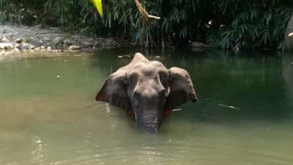Kerala Chief Minister Pinarayi Vijayan said those who fed a pregnant elephant a pineapple filler with crackers that eventually killed her would be brought to book.