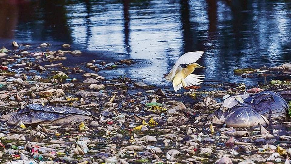 An egret settles on a pile of floating garbage at Lake Ulsoor in Bengaluru on Thursday.