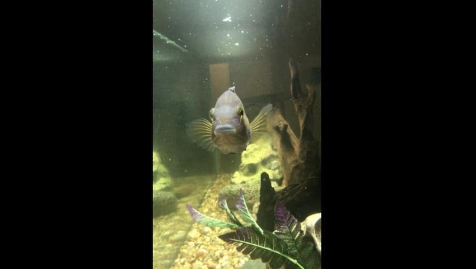 Fish 'plays' tag with its hooman. Watch hilariously adorable video