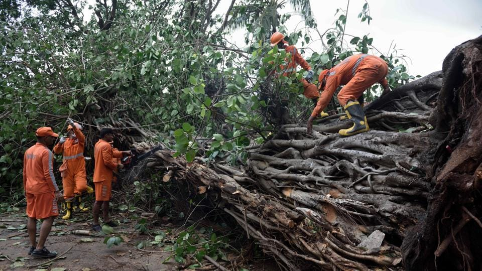 NDRF personnel clear trees from the road at Murud taluka in Raigad on Thursday.