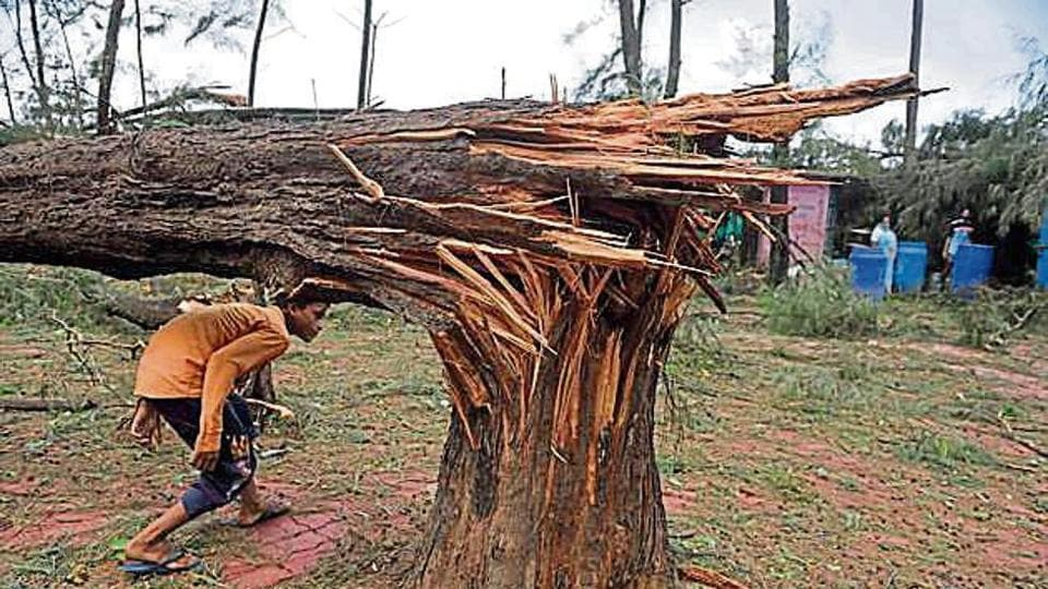 A damaged tree at Kashid beach after Cyclone Nisarga battered the Raigad district.
