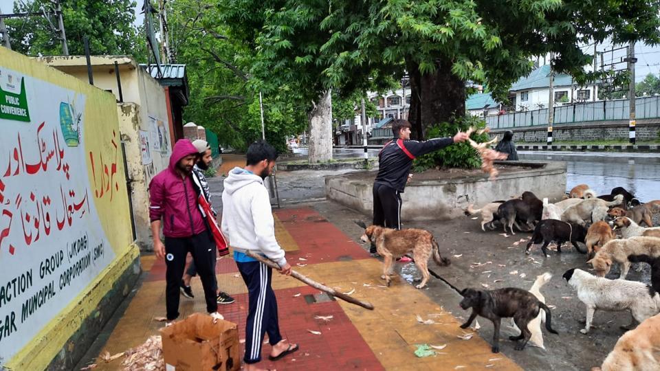 Animal welfare activists feeding stray dogs in Srinagar.