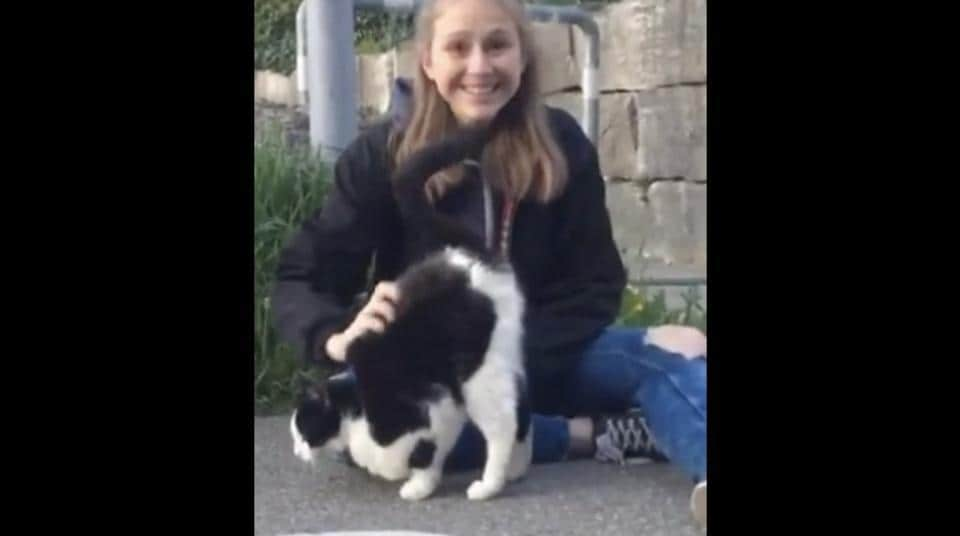 The photo shows a hooman sitting on a road petting a white-and-black furred feline.