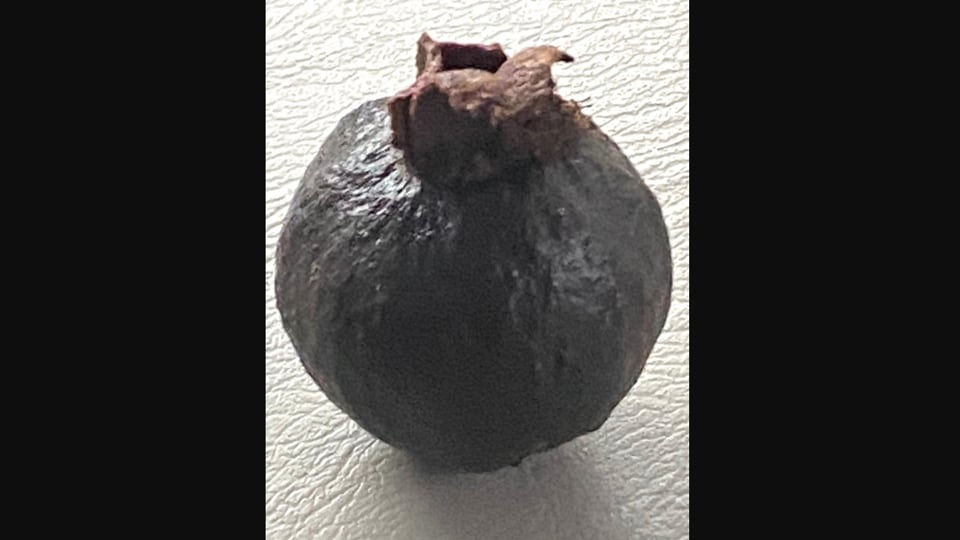 The image shows a black guava.