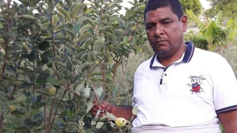 Rudra Pratap showcases the cross breed apples in his orchard.