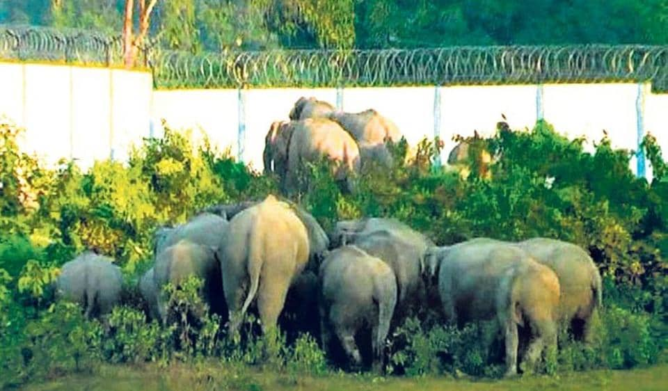 Chhattisgarh is opposed to auction of coal blocks in biodiversity-rich forests including an elephant reserve.