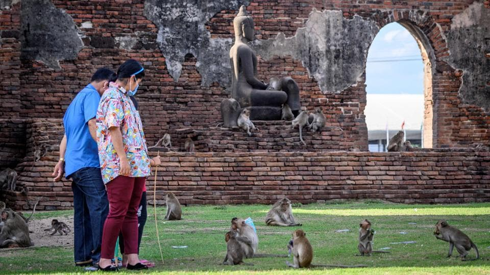 Tourists interact with longtail macaques in the Prang Sam Yod Buddhist temple on June 20. Their antics had largely been tolerated as a major lure for tourists who descended on the city before the coronavirus outbreak to feed and snap selfies with the plucky animals. (Mladen Antonov / AFP)