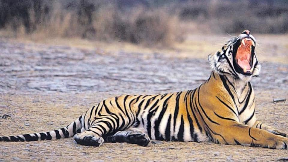 Shivalik forest awaits tiger's roar, will be UP's fourth tiger reserve