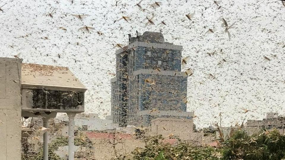The Gurugram district administration had on Friday issued a warning about a likely invasion by swarms of locusts