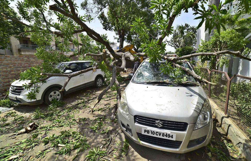 A damaged car in Tagore Nagar area, Ludhiana, on Monday after a tree fell on it due to strong winds.