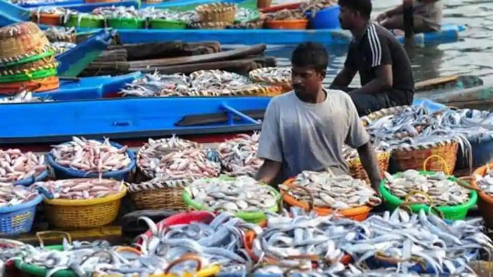 Recurring cyclonic storms and netting of huge quantities of non-edible fish items are main reasons for relatively low catch in 2019.