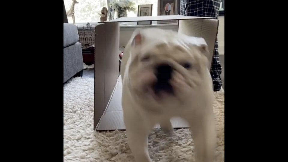 The image shows Dudley the doggo running.