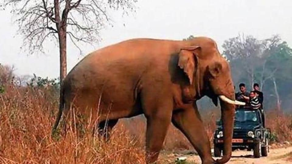 This month, total six elephants died in Chhattisgarh in four districts of the state.