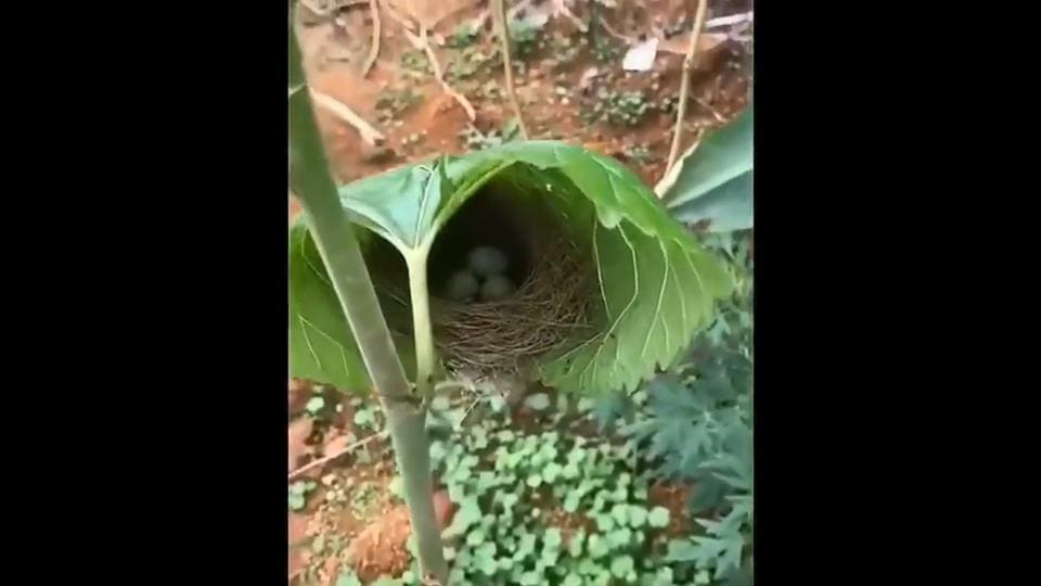 This video of a nest has caught the attention of many.